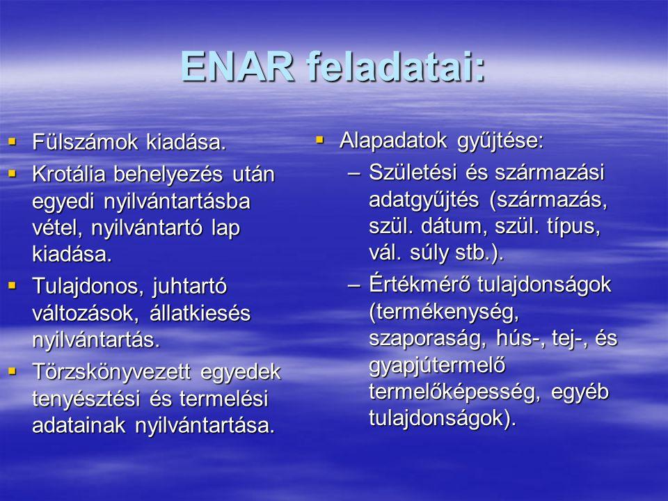 ENAR feladatai: Fülszámok kiadása. Alapadatok gyűjtése: