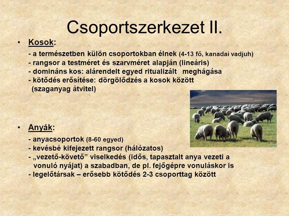 Csoportszerkezet II. Kosok: - a természetben külön csoportokban élnek (4-13 fő, kanadai vadjuh)