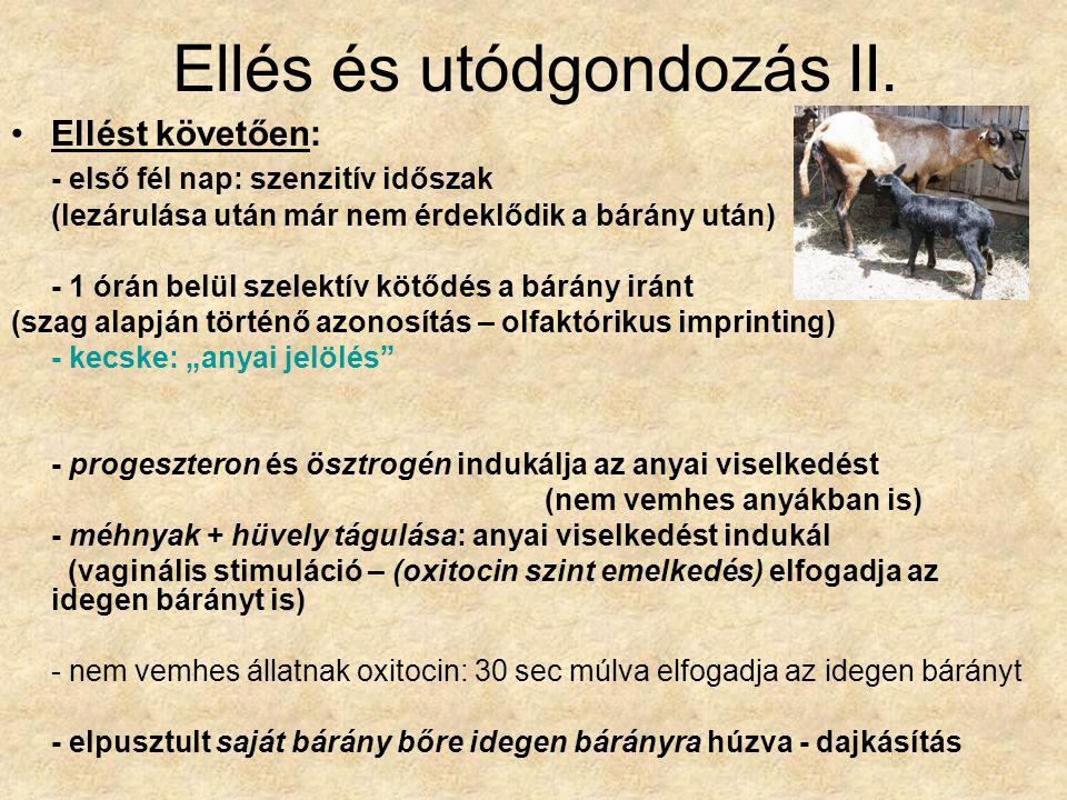 Ellés és utódgondozás II.