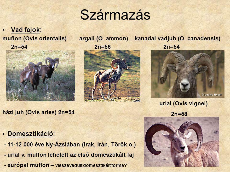 Származás Vad fajok: muflon (Ovis orientalis) argali (O. ammon) kanadai vadjuh (O. canadensis)