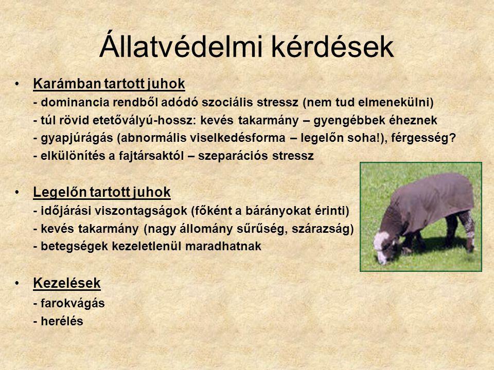 Állatvédelmi kérdések