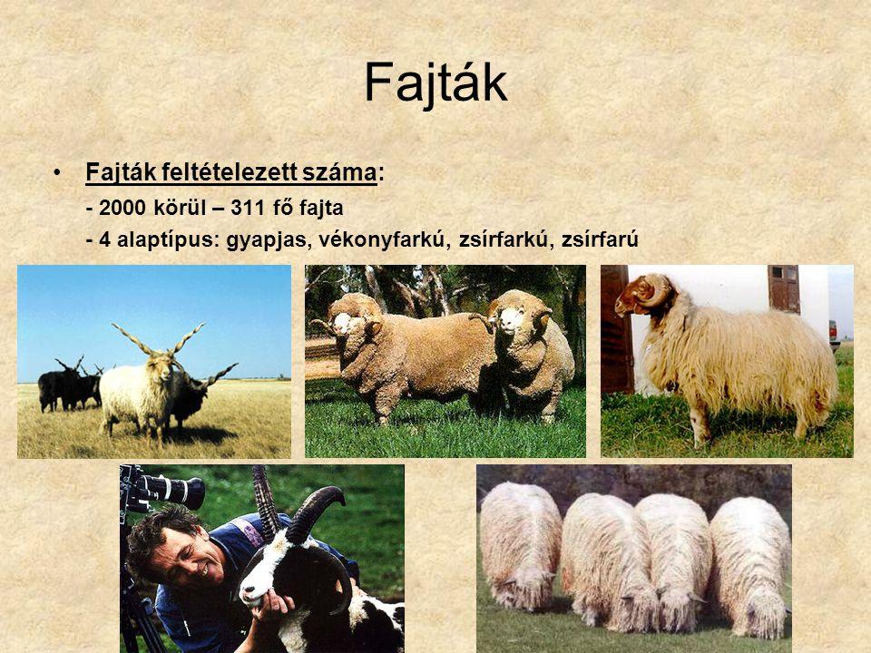 Fajták Fajták feltételezett száma: - 2000 körül – 311 fő fajta