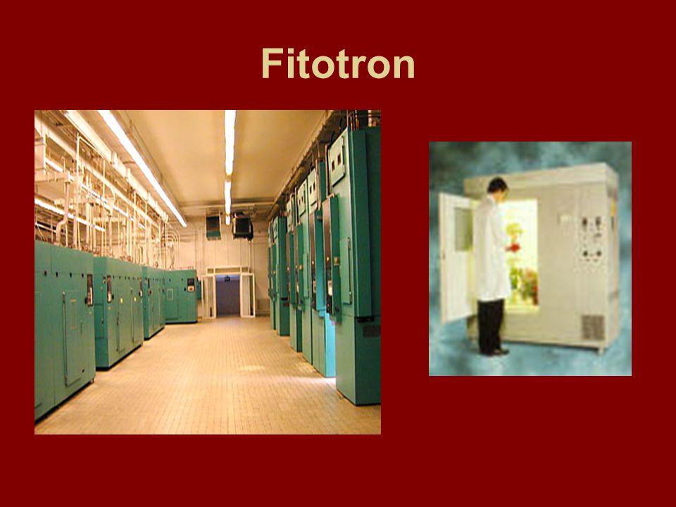 Fitotron