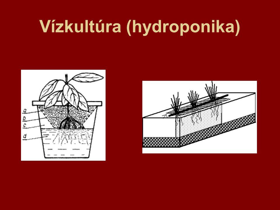 Vízkultúra (hydroponika)