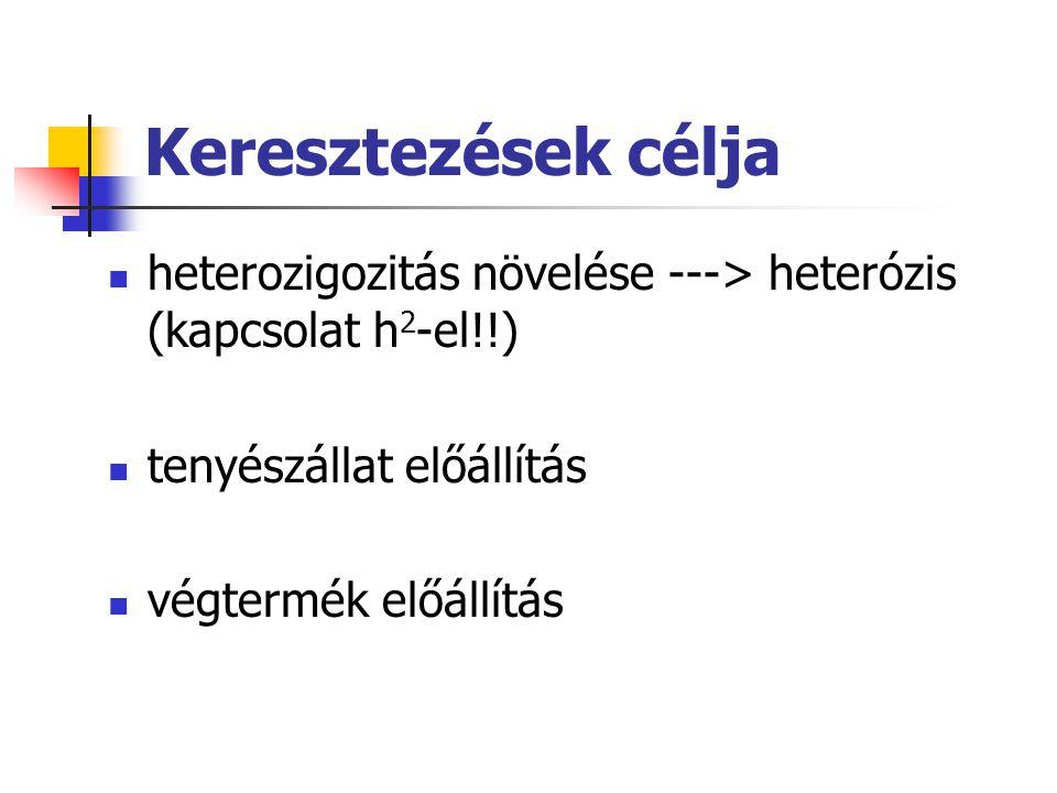 Keresztezések célja heterozigozitás növelése ---> heterózis (kapcsolat h2-el!!) tenyészállat előállítás.