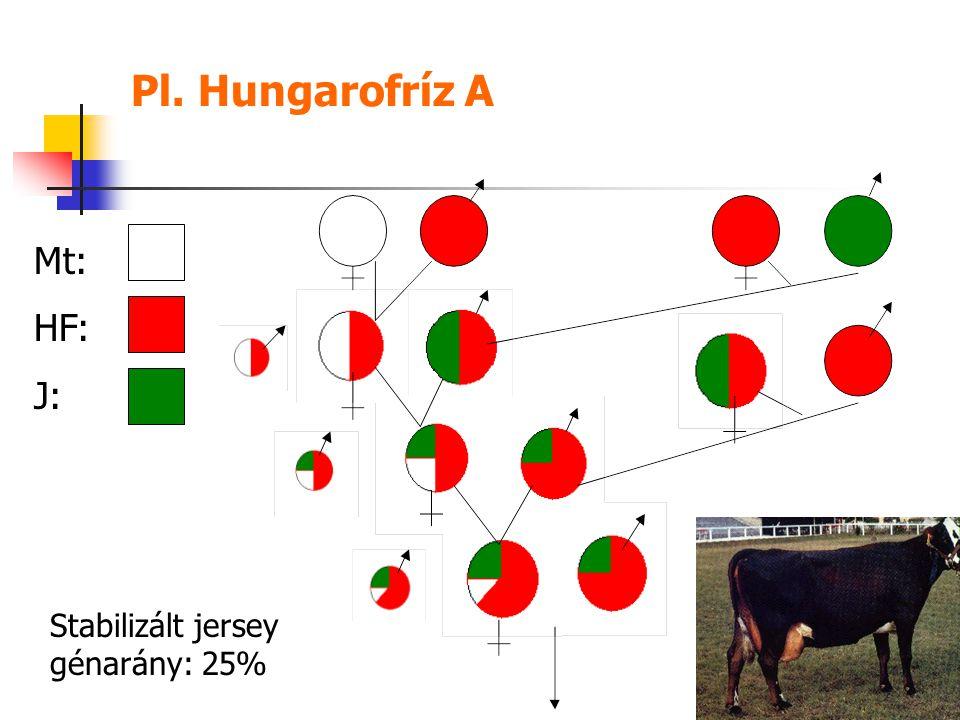Pl. Hungarofríz A Mt: HF: J: Stabilizált jersey génarány: 25%