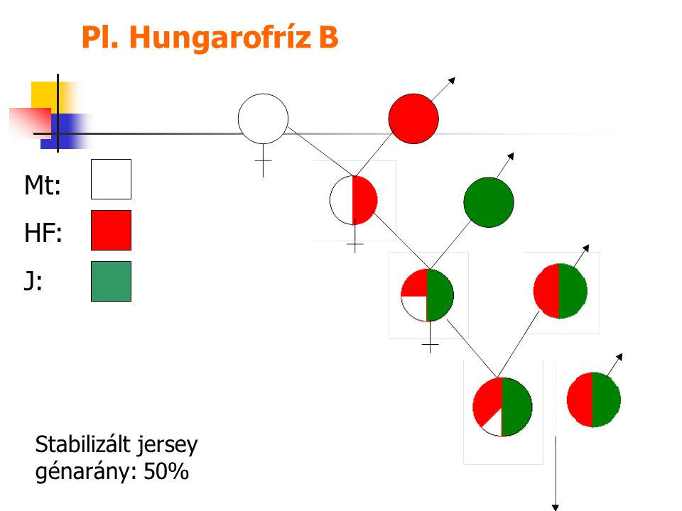 Pl. Hungarofríz B Mt: HF: J: Stabilizált jersey génarány: 50%