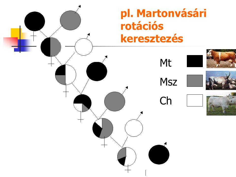 pl. Martonvásári rotációs keresztezés