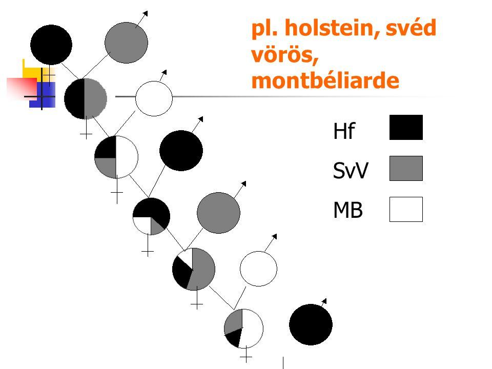 pl. holstein, svéd vörös, montbéliarde