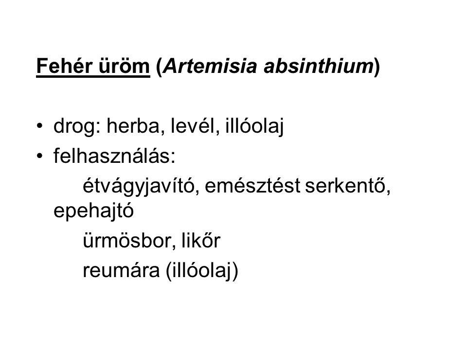 Fehér üröm (Artemisia absinthium)