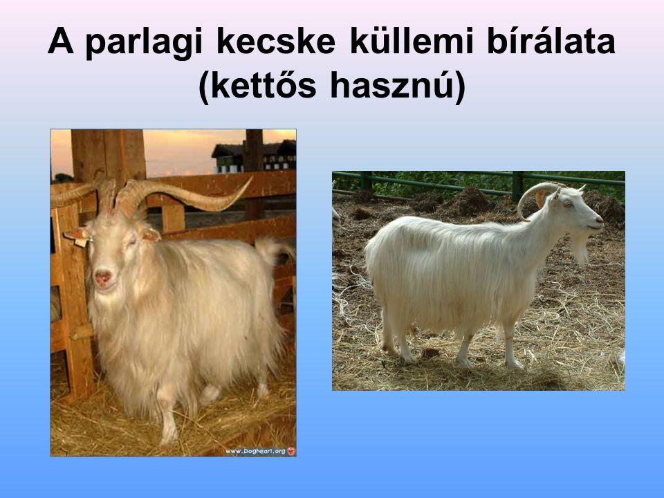 A parlagi kecske küllemi bírálata (kettős hasznú)