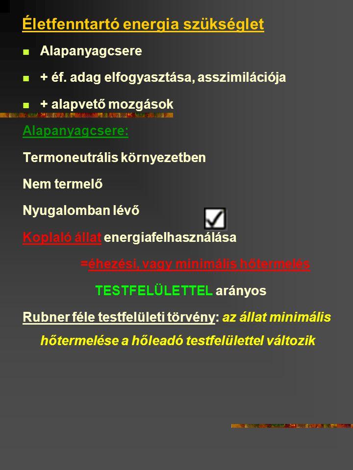 Életfenntartó energia szükséglet