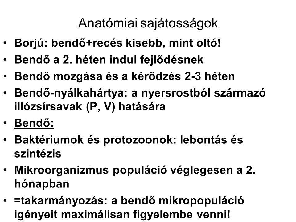 Anatómiai sajátosságok