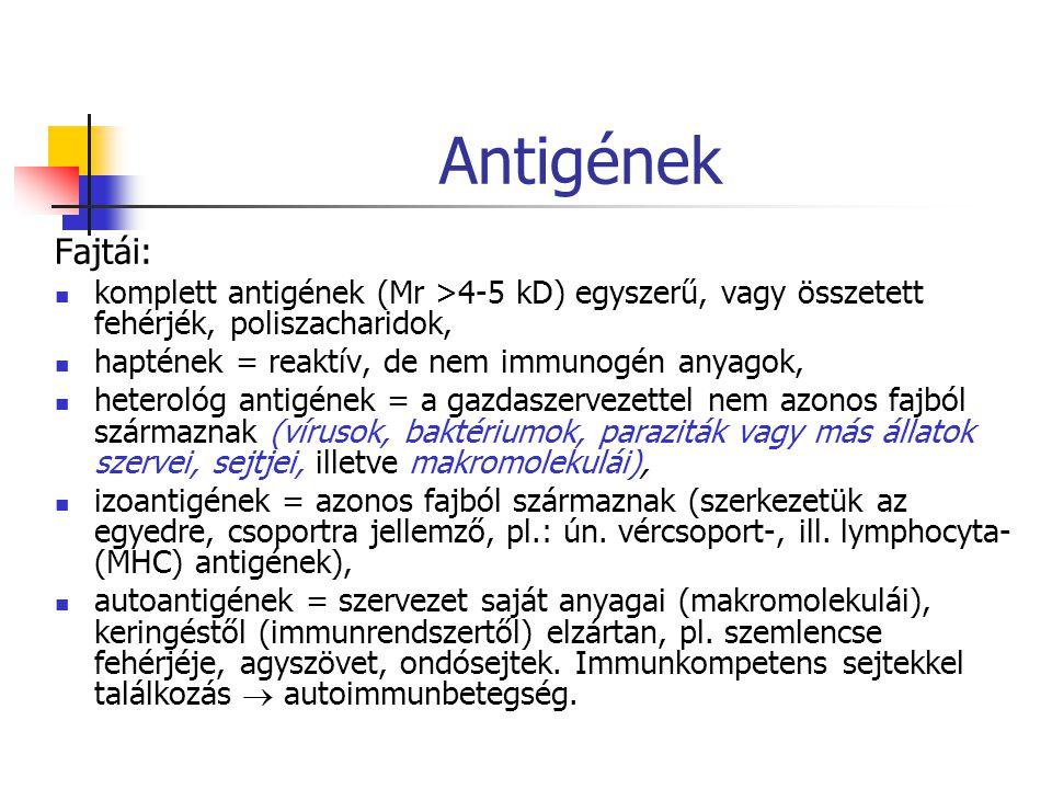 Antigének Fajtái: komplett antigének (Mr >4-5 kD) egyszerű, vagy összetett fehérjék, poliszacharidok,