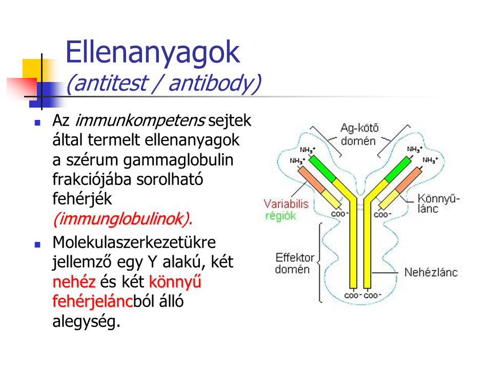 Ellenanyagok (antitest / antibody)