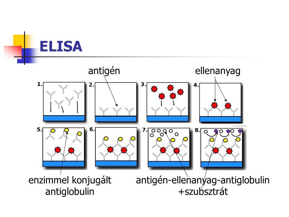 ELISA antigén ellenanyag enzimmel konjugált antiglobulin