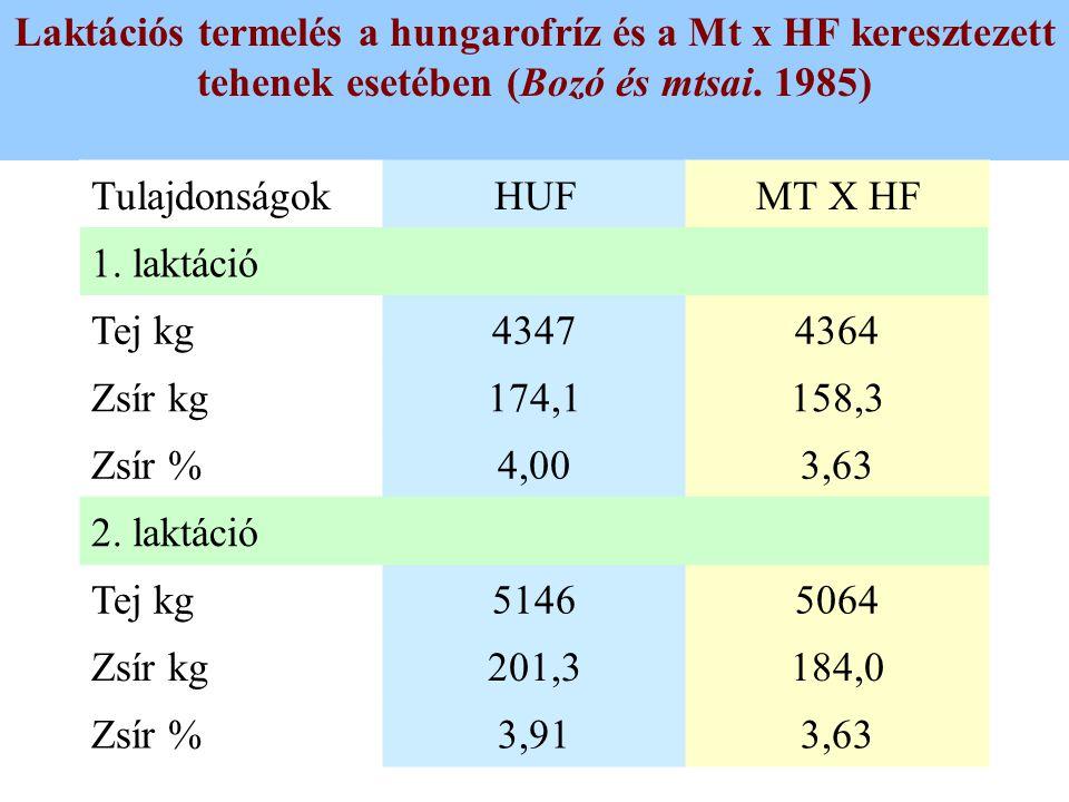 Laktációs termelés a hungarofríz és a Mt x HF keresztezett tehenek esetében (Bozó és mtsai. 1985)