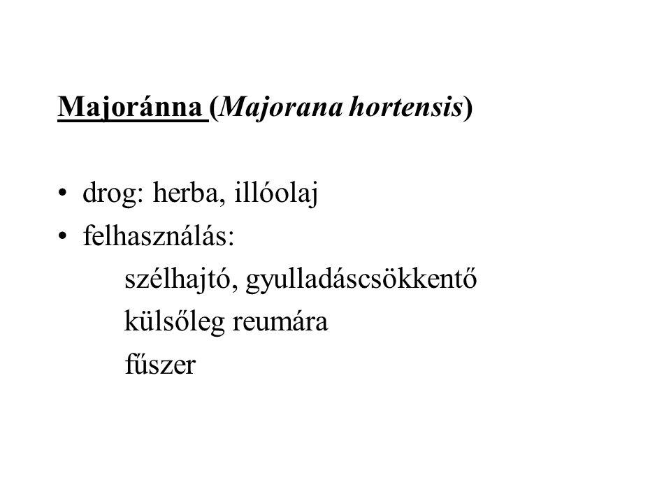 Majoránna (Majorana hortensis)