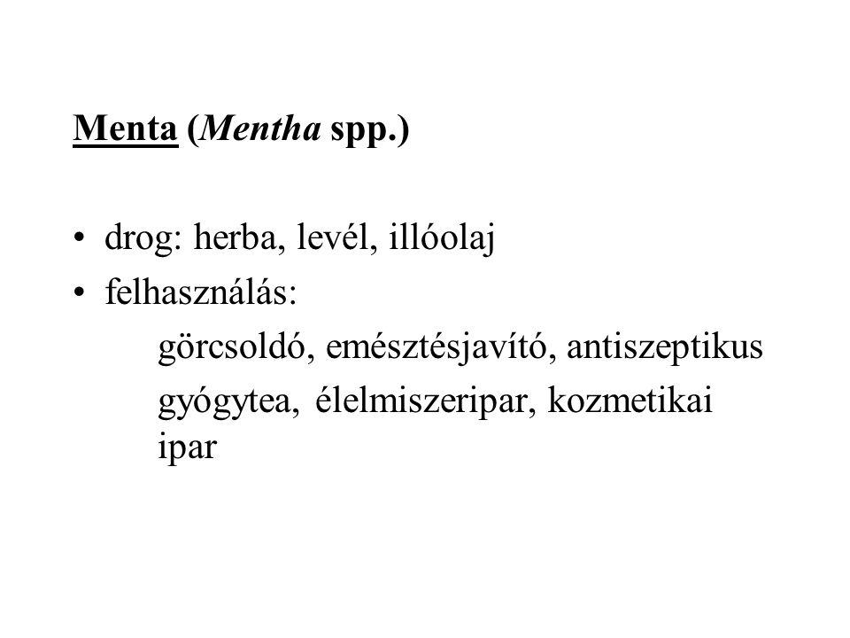 Menta (Mentha spp.) drog: herba, levél, illóolaj. felhasználás: görcsoldó, emésztésjavító, antiszeptikus.