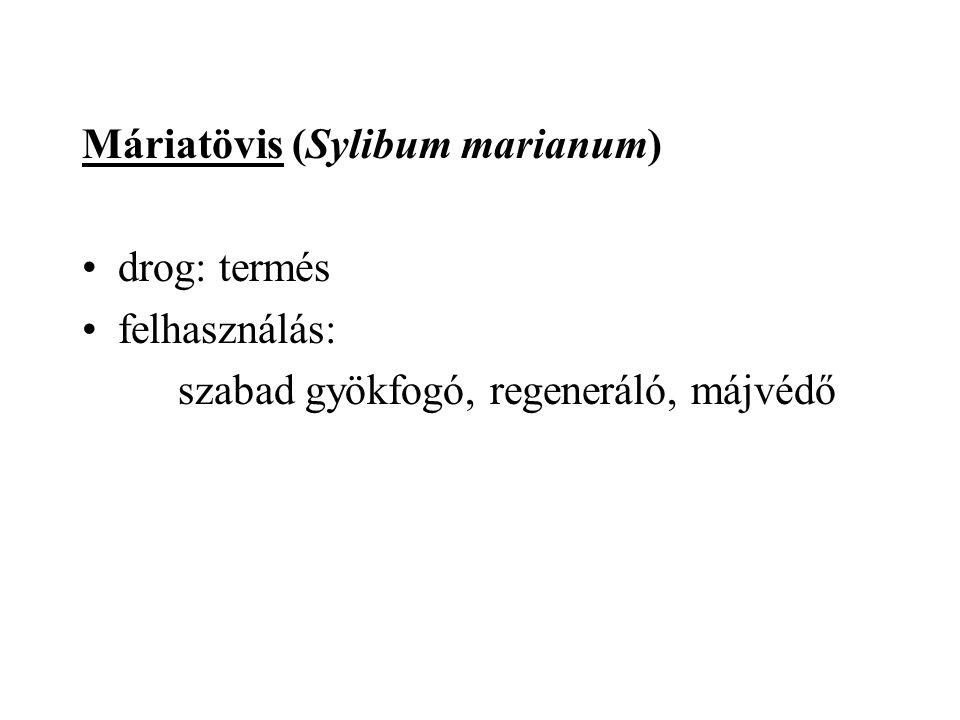 Máriatövis (Sylibum marianum)
