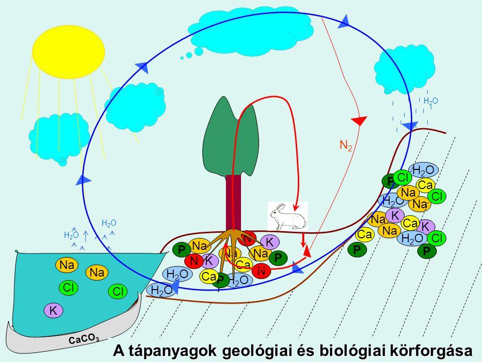 A tápanyagok geológiai és biológiai körforgása