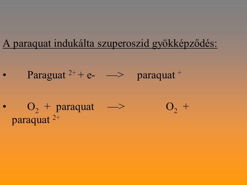 A paraquat indukálta szuperoszid gyökképződés:
