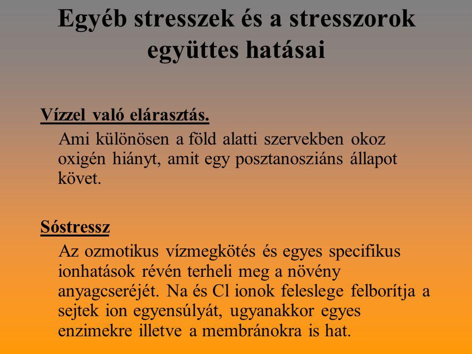 Egyéb stresszek és a stresszorok együttes hatásai