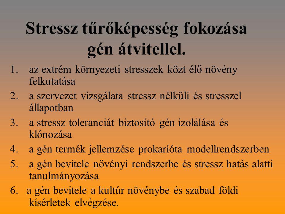Stressz tűrőképesség fokozása gén átvitellel.