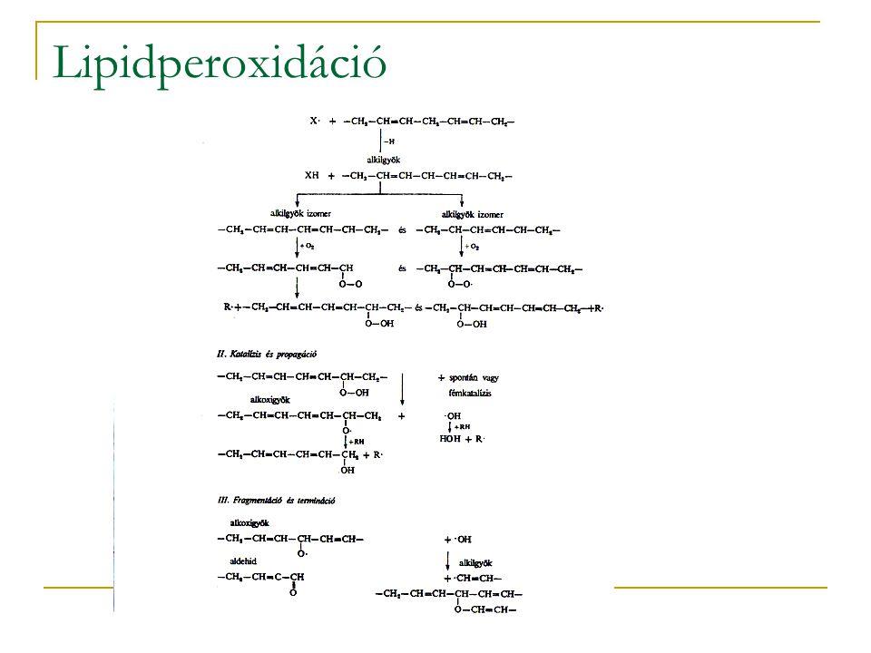 Lipidperoxidáció