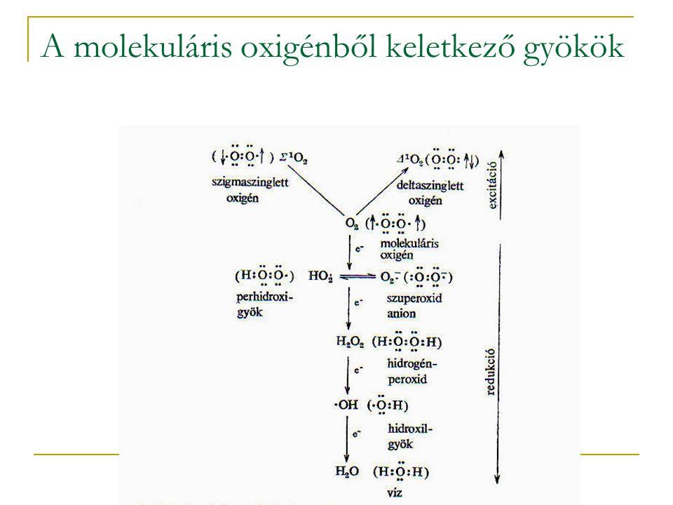 A molekuláris oxigénből keletkező gyökök