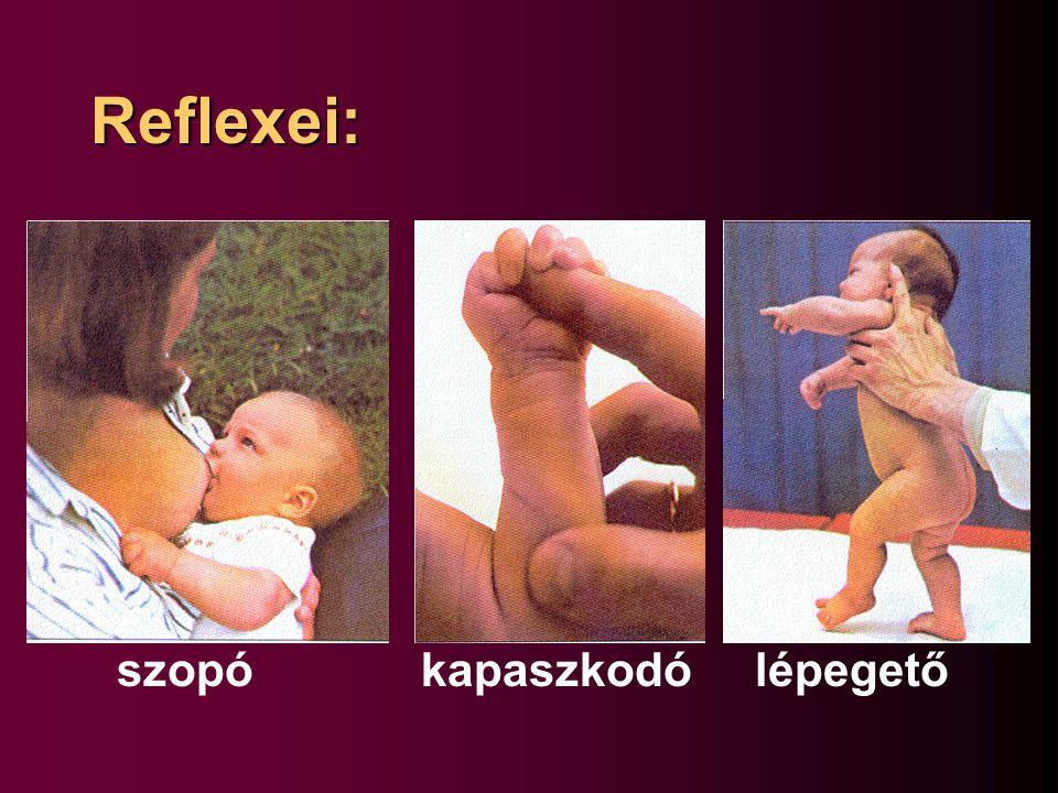 Reflexei: szopó kapaszkodó lépegető