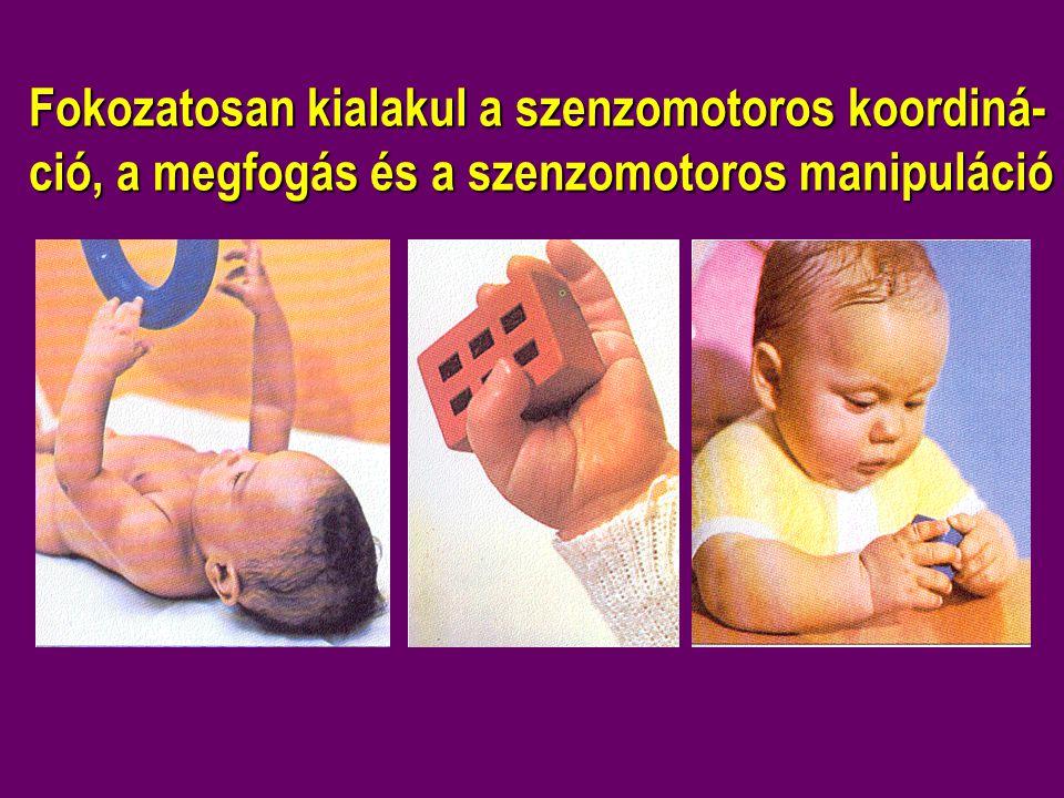 Fokozatosan kialakul a szenzomotoros koordiná-ció, a megfogás és a szenzomotoros manipuláció