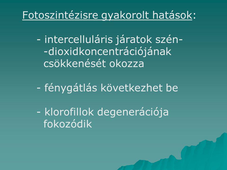 Fotoszintézisre gyakorolt hatások:. - intercelluláris járatok szén-