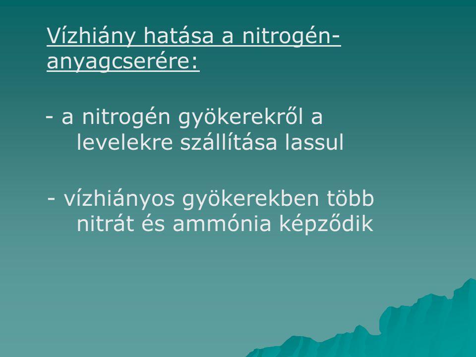 Vízhiány hatása a nitrogén- anyagcserére: