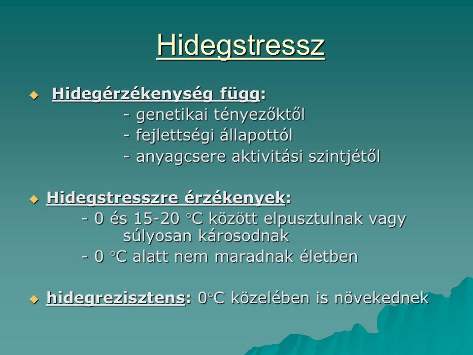 Hidegstressz Hidegérzékenység függ: - genetikai tényezőktől