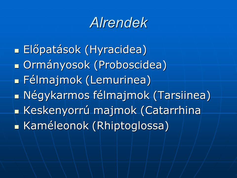 Alrendek Előpatások (Hyracidea) Ormányosok (Proboscidea)