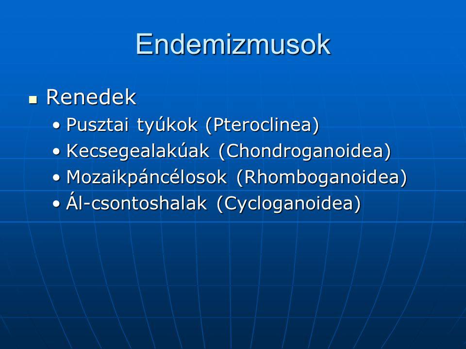Endemizmusok Renedek Pusztai tyúkok (Pteroclinea)