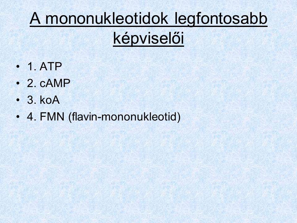 A mononukleotidok legfontosabb képviselői