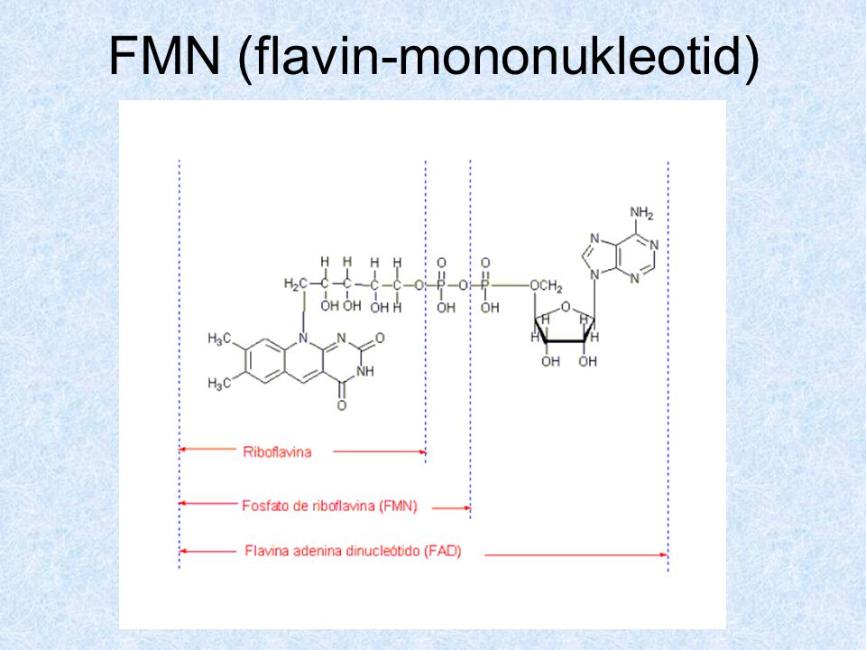 FMN (flavin-mononukleotid)