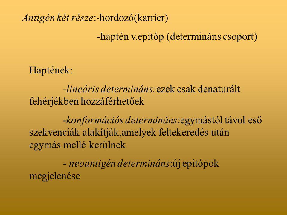 Antigén két része:-hordozó(karrier)