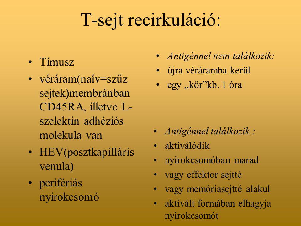 T-sejt recirkuláció: Tímusz