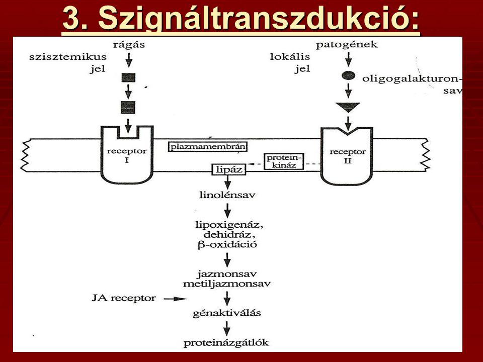 3. Szignáltranszdukció: