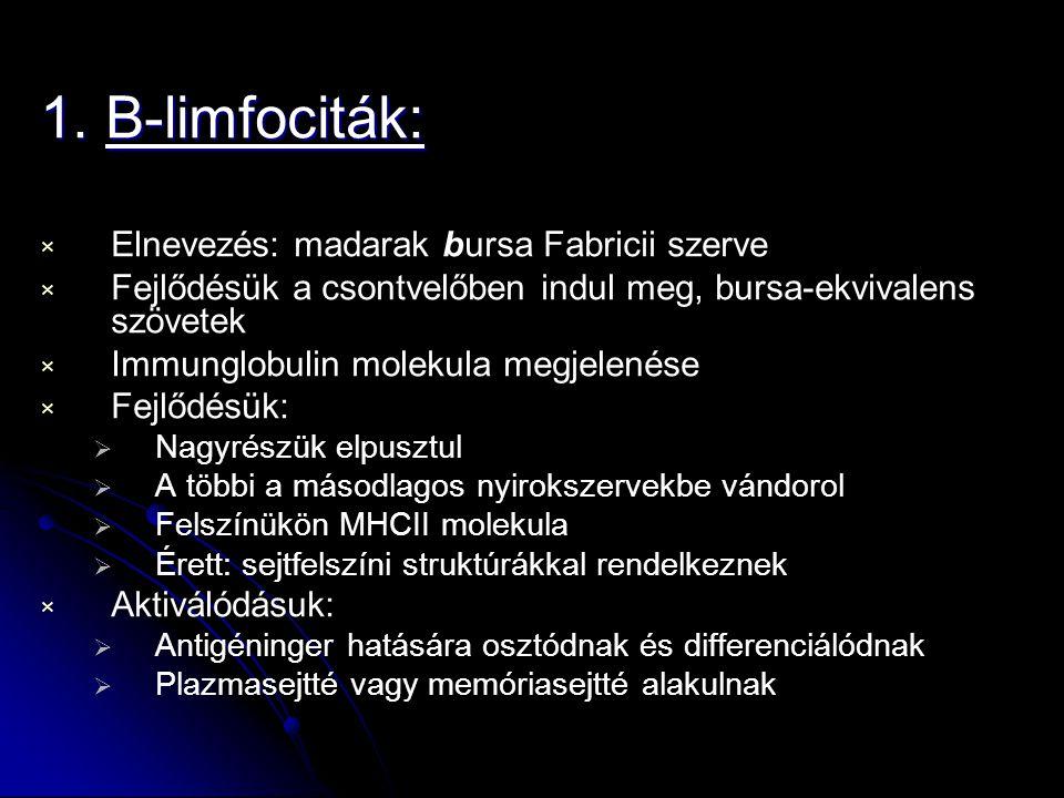 1. B-limfociták: Elnevezés: madarak bursa Fabricii szerve