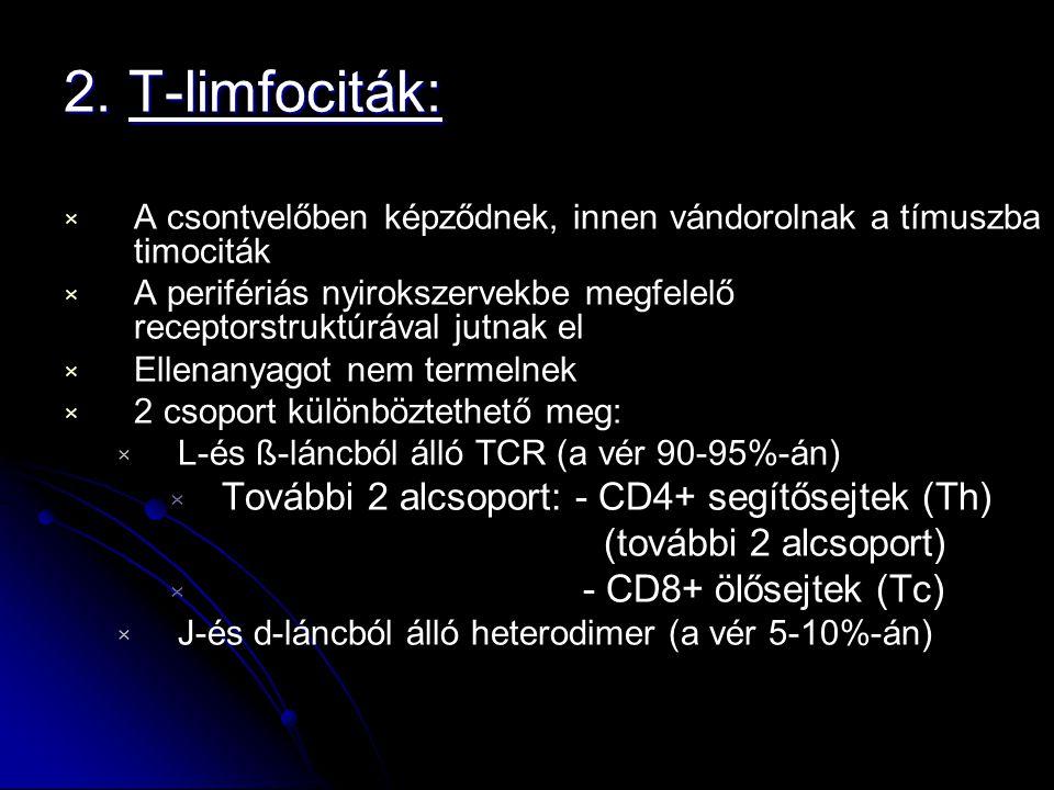2. T-limfociták: További 2 alcsoport: - CD4+ segítősejtek (Th)