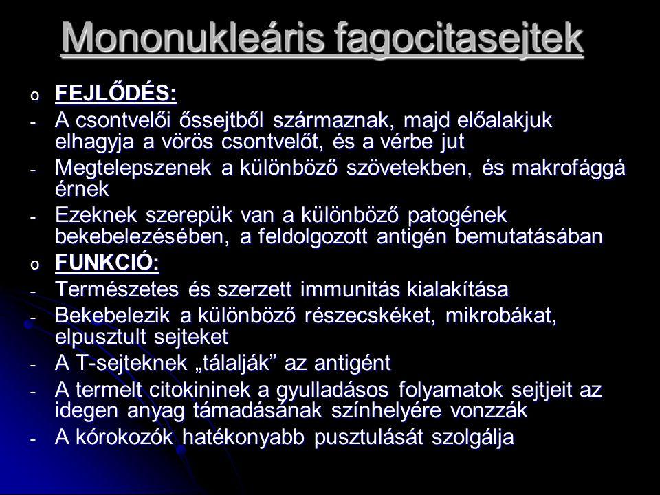 Mononukleáris fagocitasejtek