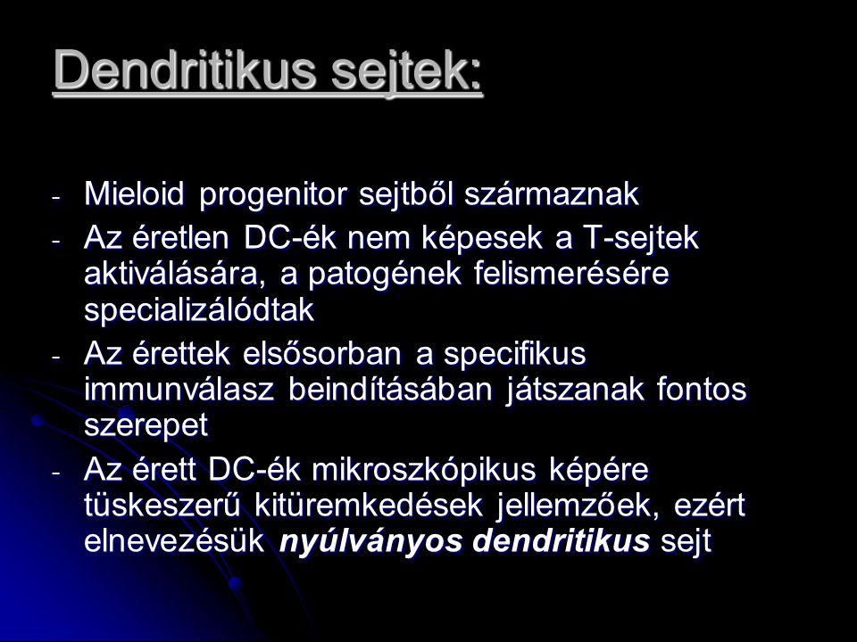 Dendritikus sejtek: Mieloid progenitor sejtből származnak