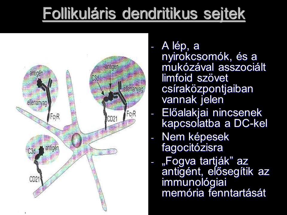 Follikuláris dendritikus sejtek