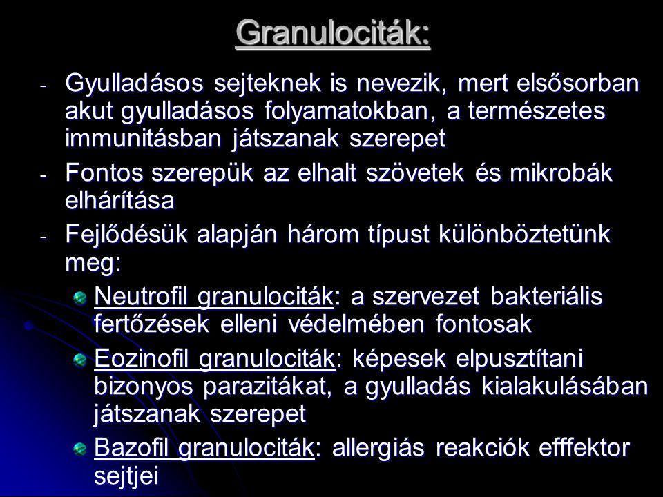 Granulociták: Gyulladásos sejteknek is nevezik, mert elsősorban akut gyulladásos folyamatokban, a természetes immunitásban játszanak szerepet.