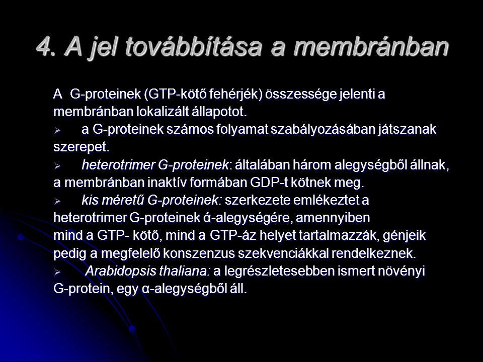4. A jel továbbítása a membránban