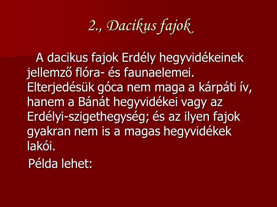 2., Dacikus fajok